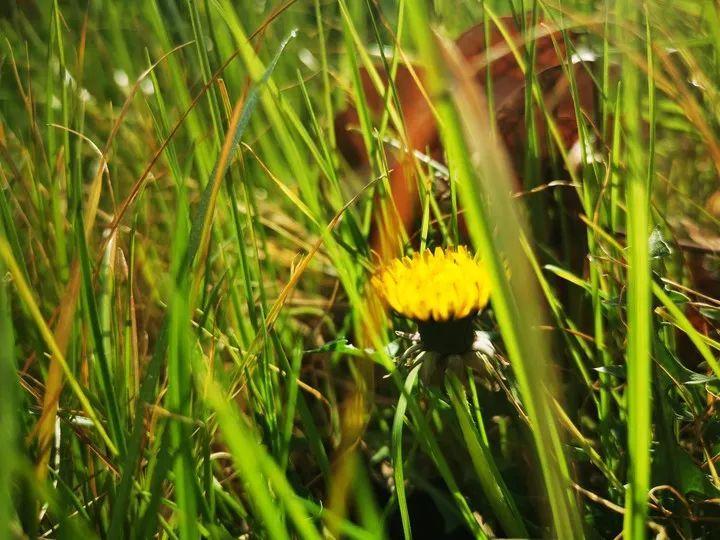云赏花丨春天里的校园,和记忆中一样美